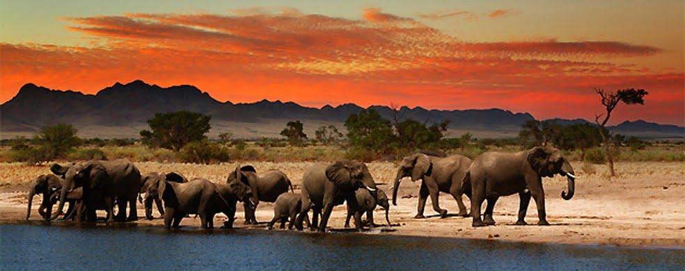 africa-elephants evening